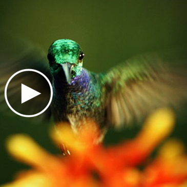 Ted Talk: The Hidden Beauty of Pollination