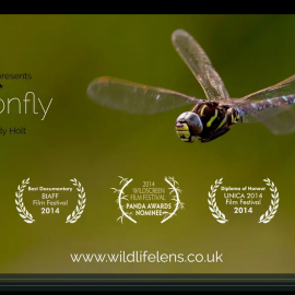 The Life of a Dragonfly