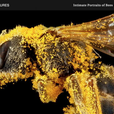 Stunning, Intimate Portraits of Bees